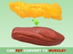 can-fat-convert-to-muscle